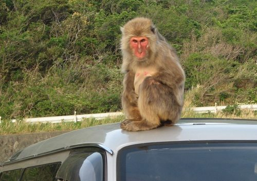 monkey on our car